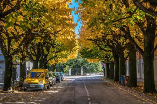 Viale Barbacane in autunno
